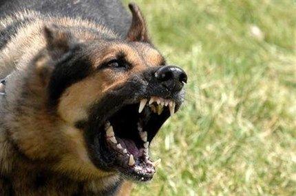 kutyatamadas(2)(430x286).jpg (kutyatámadás, )