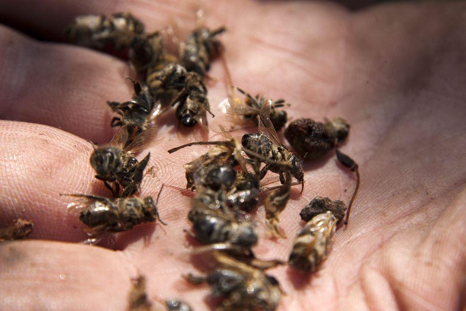 méhek (méhek)
