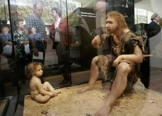 neandervölgyi (neandervölgyi, )
