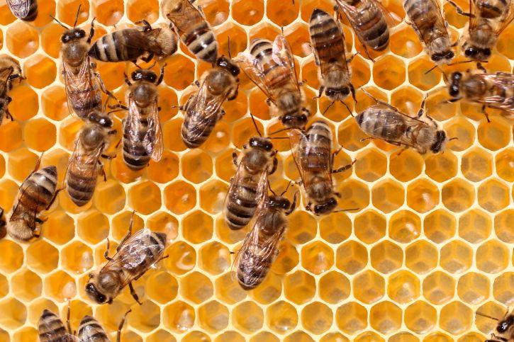 Méhek (méhek, kaptár, )