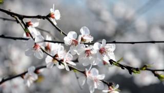 Virágzás (virág, virágzás, tavasz, tavaszias idő, )