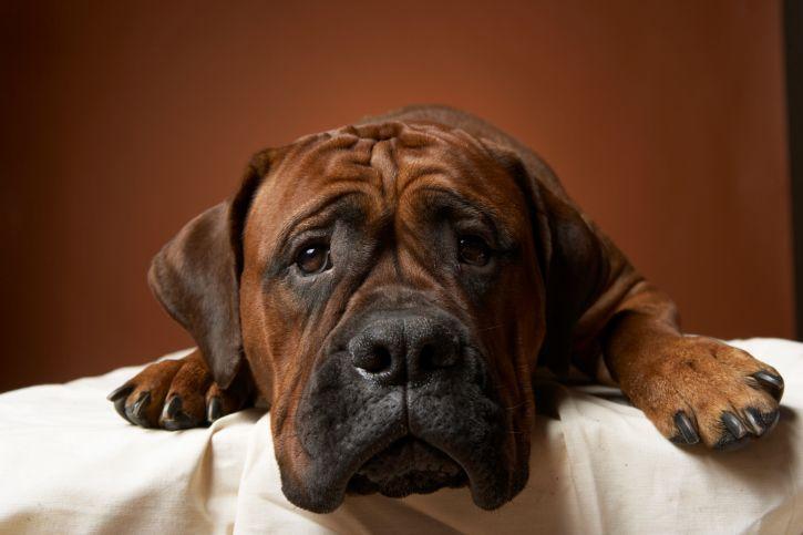 Kutya (kutya, gyepmesteri telep, sintértelep, )