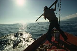 bálnavadászat (bálnavadászat)