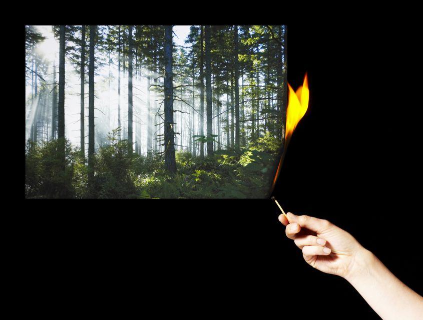 erdőtűz (gyújtogatás, tűz, )