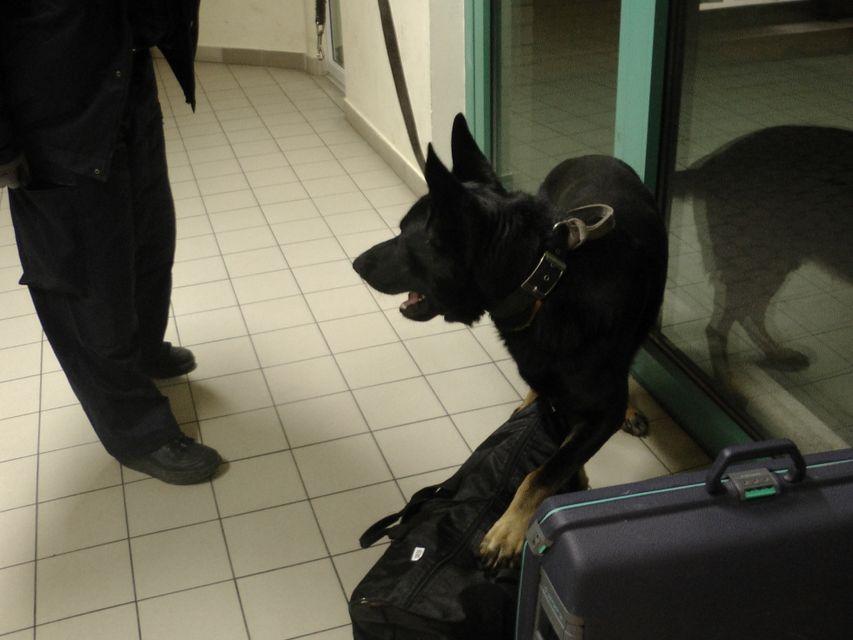 heroin röszkén, rex, drogkereső kutya (heroin röszkén, rex, drogkereső kutya, )