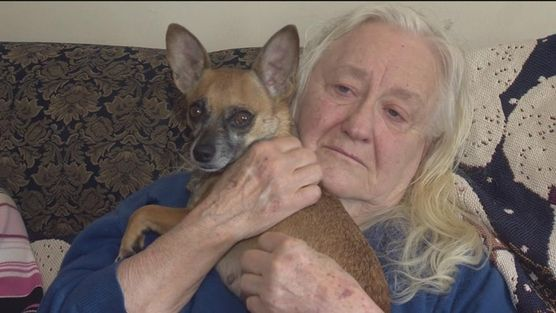 kiskutya a nagymamával (kutya, )