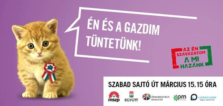 macska együtt plakát (macska, plakát, )