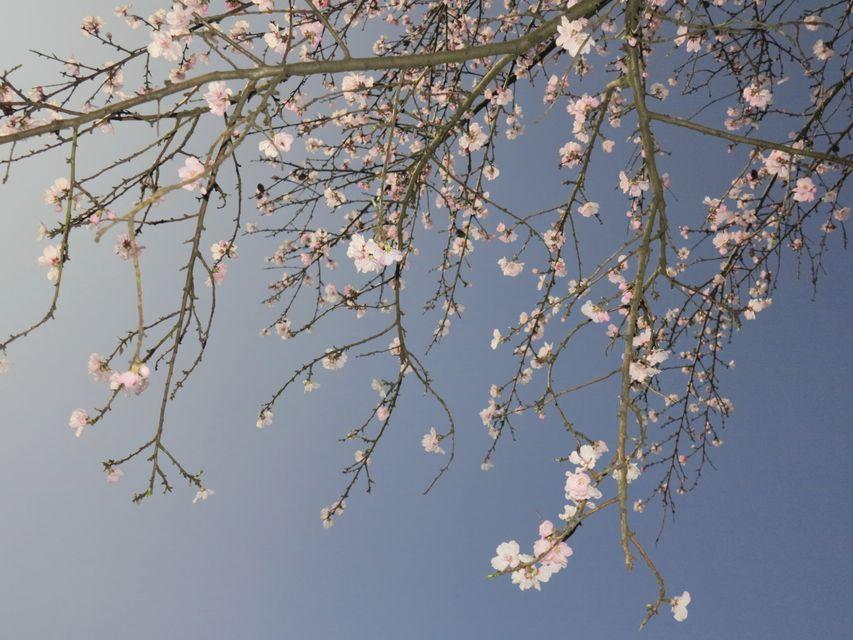 tavasz (rügy, virág, tavaszodik)