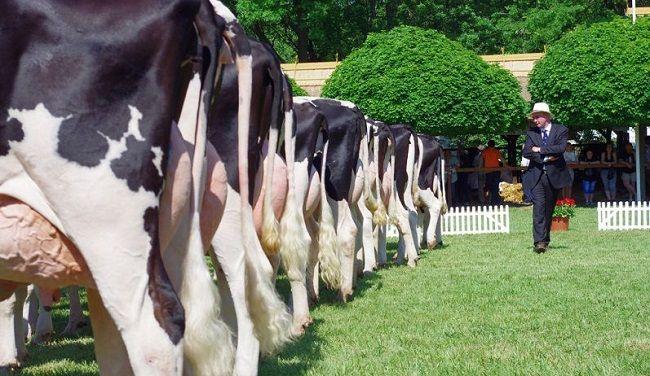Állattenyésztési napok (vásárhelyi állattenyésztési napok,)