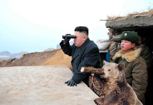 Észak-Korea maci (medve, Kim Dzsongun)