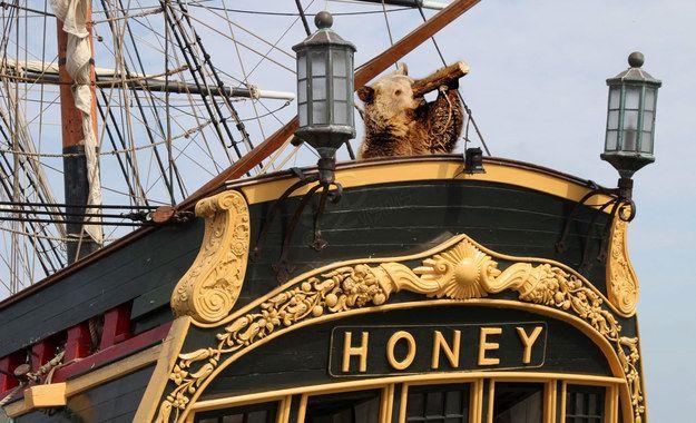 Medve a hajón (medve, látcső, hajó)