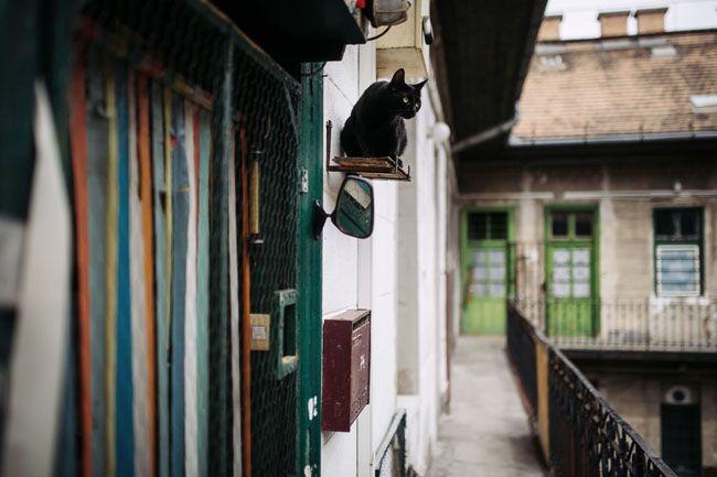 macska ember (macska)