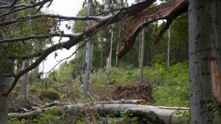 viharkár magyarországon (viharkár, erdő, yvette, )