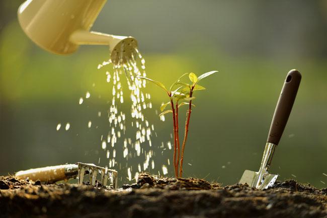 növény (növény, fa, természet, kert)
