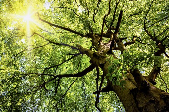 növény (növény, fa, természet, )