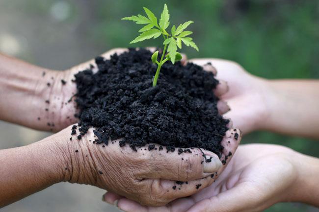 növény (növény, természet, kert)