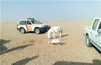 szamár a sivatagban (szamár, terepjáró, sivatag, )