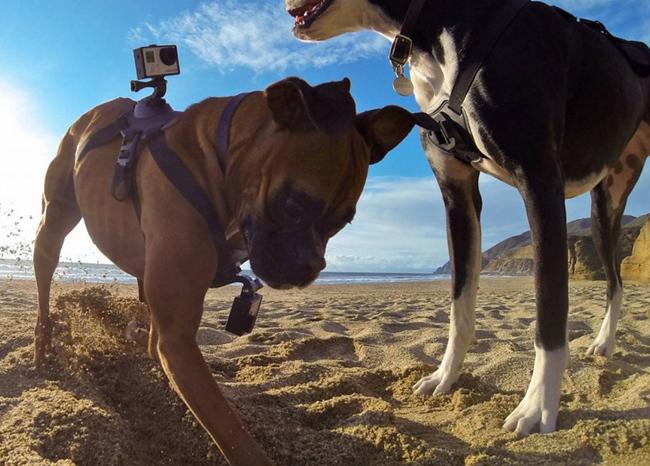 tn-goku (technet, megapixel, akciókamera, gopro, kutya)