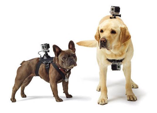 tn-gokua (technet, megapixel, akciókamera, gopro, kutya)