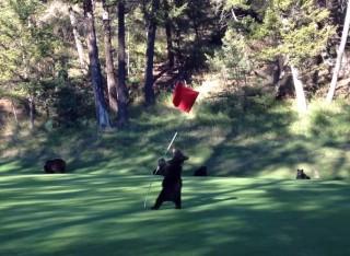 medvebocs a golfpályán (medvebocs, golf, kanada, )