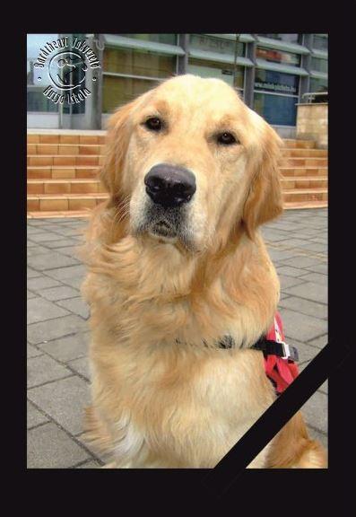 rusty (vakvezető kutya, )