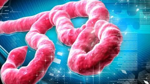 tn-eb1 (technet, symantec, ebola, vírus, email, biztonság, védelem)