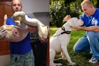 argentin dog (argentin dog, mentett kutya, állatkínzás, megette a pórázt)