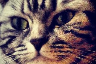 elveszett cica, Erzsi gyere haza (elveszett cica, Erzsi gyere haza)
