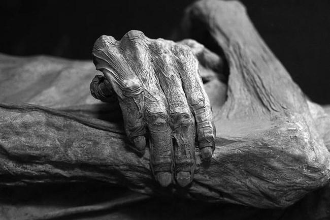 Mumia(650x433).jpg (múmia, )