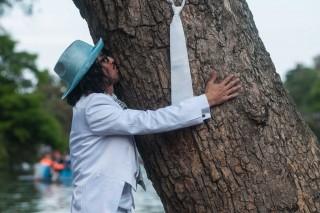 fa esküvő (esküvő, fa,)