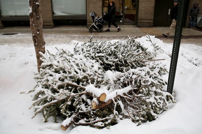 fenyőfa (fenyőfa, havazás, hó, szánkózás, december, Karácsony, tél, )