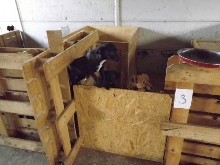kutyahideg (kutyaház, )