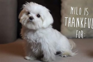 milo(960x640).jpg (kutya, )