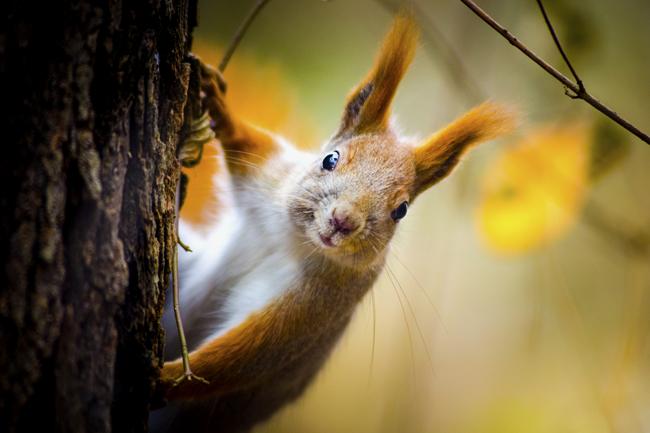 mókus (mókus, állat, erdő, állatmese,)