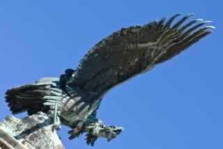 turul madár (turul madár)