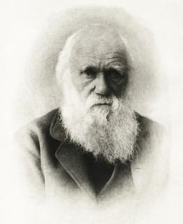 darwin (darwin)