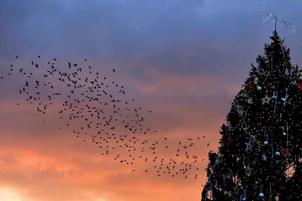 giccs karácsonyfával (karácsonyfa, karácsony, )