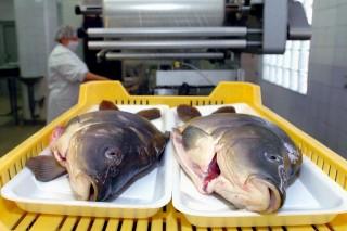 hal (friss hal, Karácsony, ponty)