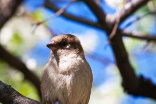 madár (tavasz, veréb, )