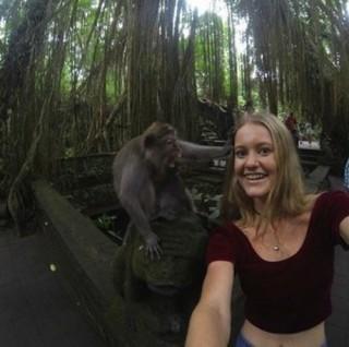 majomszelfi1 (majom, szelfi, )