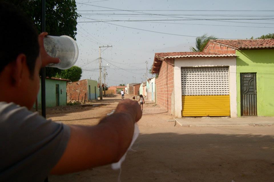 Szúnyogok szabadonengedése (szúnyog, kajmán-szigetek,)