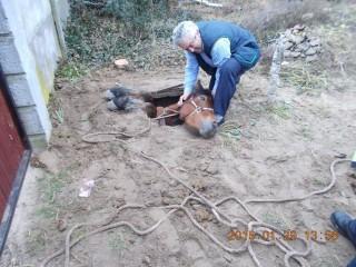 aknába zuhant ló (aknába zuhant ló)
