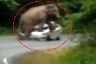 elefant-tori-az-autot(960x640).jpg (összetört autó, elefánt, )