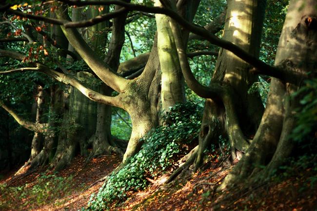 erdő (állat, erdő, állatmese,)