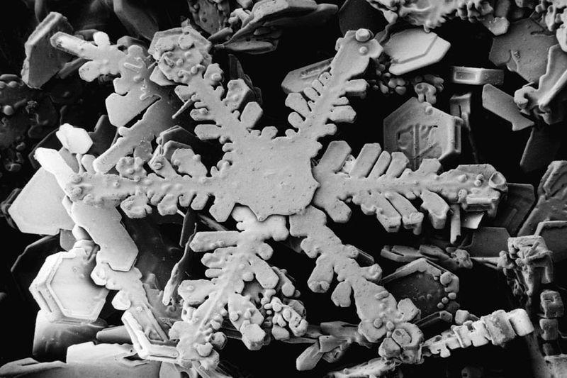 hó elektronmikroszkóp alatt (hó, elektronmikroszkóp, )
