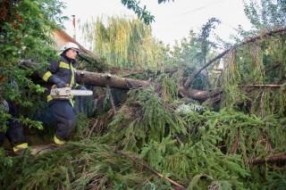 kidőlt fák Orosházán (kidőlt fa, vihar)