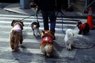 kutyasétáltatás (kutya, kutyák, kutyasétáltatás, )