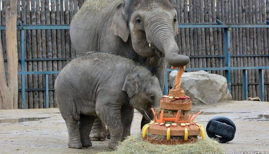 Asha-elefanttortaval(960x640).jpg (Asha elefánttortával)