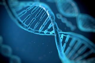 DNS (dns, genetika, )
