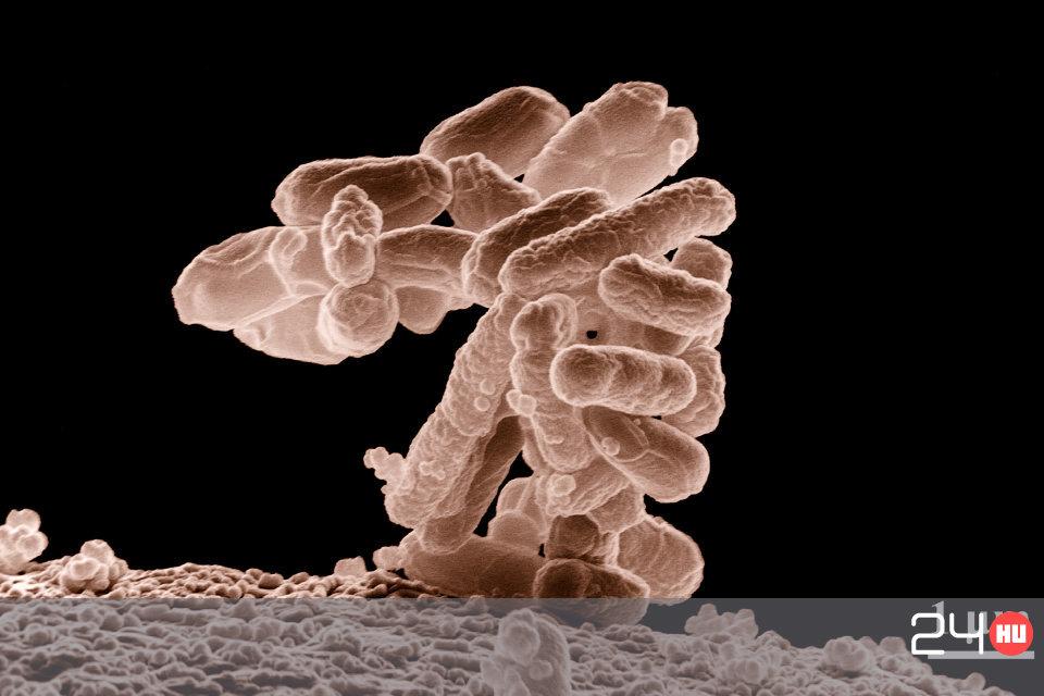 vírus baktérium)